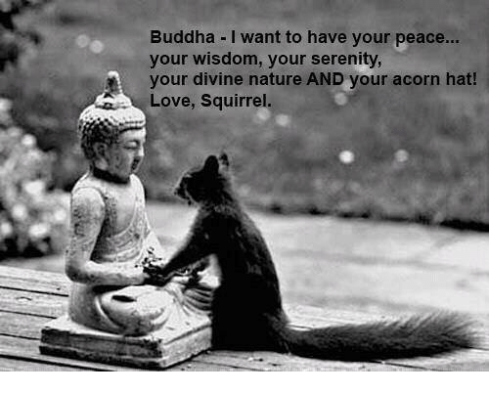 Image result for meme: squirrel and buddha hat